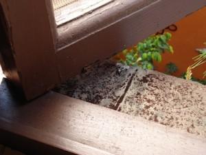 marco de ventana con problema de escarabajo copia